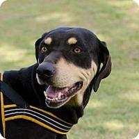 Adopt A Pet :: Harmony - Greenwood, SC