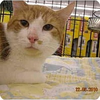 Adopt A Pet :: Champage - Riverside, RI