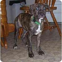 Adopt A Pet :: Rugar - Chandler, IN