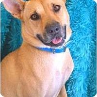 Adopt A Pet :: LUCY LUE - Phoenix, AZ