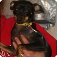 Adopt A Pet :: Selinis - Swiftwater, PA