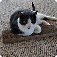 Adopt A Pet :: Chloe - N. Billerica, MA