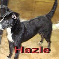 Border Collie Mix Dog for adoption in Coleman, Texas - Hazle