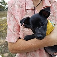 Adopt A Pet :: Mr. Wiggles - San Antonio, TX
