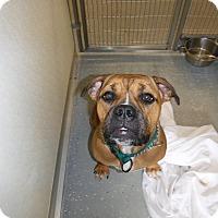 Adopt A Pet :: SUMI - Sandusky, OH