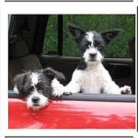Adopt A Pet :: PequeNo - El Cajon, CA