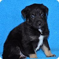 Adopt A Pet :: **EMERY** - Mukwonago, WI