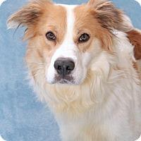 Adopt A Pet :: Lafayette - Encinitas, CA