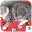 Photo 1 - Domestic Shorthair Cat for adoption in AUSTIN, Texas - Judy