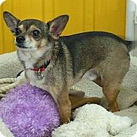 Adopt A Pet :: Pablo - Rigaud, QC