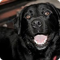 Adopt A Pet :: Cody - Hastings, NY
