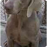 Adopt A Pet :: Carter  **ADOPTED** - Eustis, FL