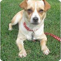 Adopt A Pet :: Paisley - Arlington, TX