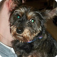 Adopt A Pet :: Niki - Lorain, OH