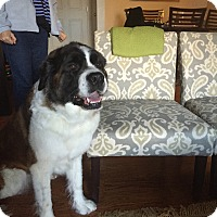 Adopt A Pet :: ROMI - ADOPTION PENDING - Sudbury, MA