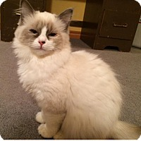 Adopt A Pet :: Joni - Edmonton, AB