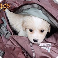 Adopt A Pet :: Wags - Austin, TX