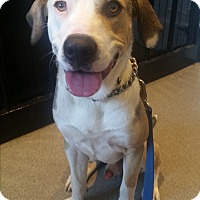 Adopt A Pet :: Wade - West Hartford, CT