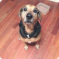 Adopt A Pet :: Zelda - Acushnet, MA