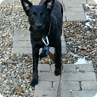 Adopt A Pet :: Maggie - Northeast, OH