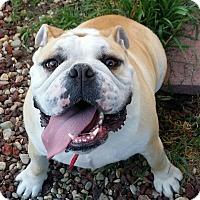 Adopt A Pet :: Renzo - beverly hills, CA