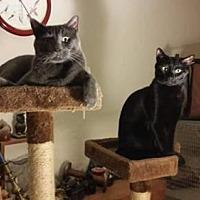Adopt A Pet :: Alexei - Albuquerque, NM