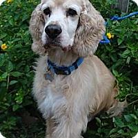 Adopt A Pet :: Casper - Sugarland, TX