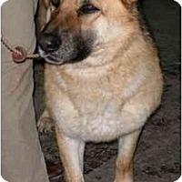 Adopt A Pet :: Millie - Hamilton, MT