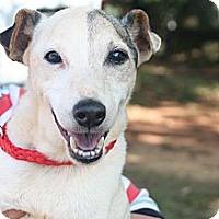 Adopt A Pet :: Jerry Lee - hartford, CT