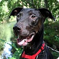 Adopt A Pet :: Willie - Douglas, MA
