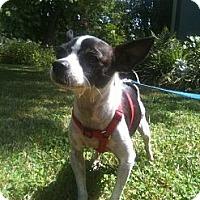 Adopt A Pet :: Russel - West Hills, CA