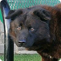 Adopt A Pet :: Si - white settlment, TX