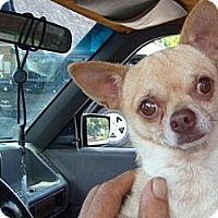Adopt A Pet :: Bennie - Windsor, MO