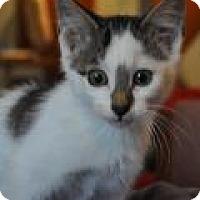 Adopt A Pet :: Starski - Port Republic, MD