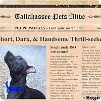 Adopt A Pet :: Bogie - Tallahassee, FL