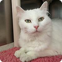 Adopt A Pet :: Katarina - Topeka, KS