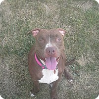 Adopt A Pet :: Emmy Lou - Tiffin, OH
