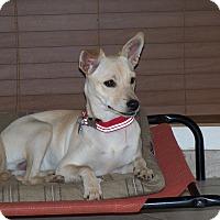 Adopt A Pet :: Mandy - Apache Junction, AZ