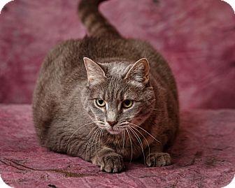 Domestic Shorthair Cat for adoption in Harrisonburg, Virginia - Joy