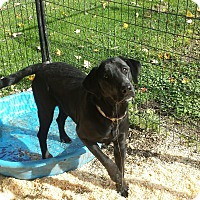 Adopt A Pet :: Asia - Cleveland, OH