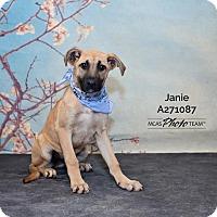Labrador Retriever Mix Dog for adoption in Conroe, Texas - JANIE