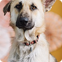 Adopt A Pet :: Jeremiah - Portland, OR