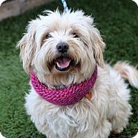 Adopt A Pet :: Lola - Los Angeles, CA