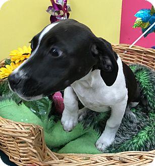 Terrier (Unknown Type, Medium) Mix Puppy for adoption in Decatur, Alabama - DeeDee