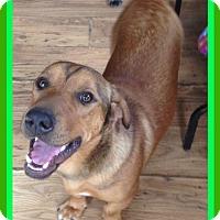 Adopt A Pet :: ASTRO - Sebec, ME
