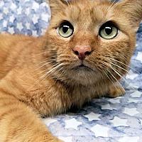Adopt A Pet :: Carlisle - Framingham, MA