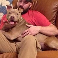 Adopt A Pet :: Mattie - Union City, TN
