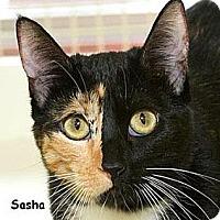Adopt A Pet :: Sasha B - Sacramento, CA