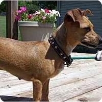 Adopt A Pet :: Annie - Johnsburg, IL