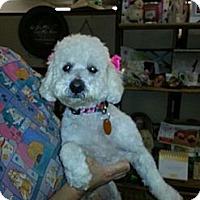 Adopt A Pet :: Twinkle - Kingwood, TX